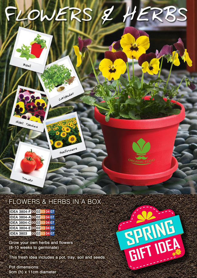Flowers and Herbs in a Box – Promotional Items